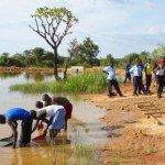Estudiantes de Ocer Campion crían 2000 alevines de tilapia , en un estanque del colegio.  Foto de: colegio Ocer Campion de los jesuitas