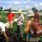 Pasantes de la granja, comunidad comparte programas de agricultura. Foto de: Ignatiusguelph.ca