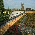 Azotea verde experimental sobre el techo del Centro de Ciencias SJU. Foto de: Universidad de San José