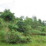 Regeneración de las tierras altas de los bosques en la cuenca superior de Alta Pulangi en el norte de Mindanao, Filipinas. Foto de: ESSC
