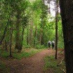 Proyecto de plantación de un bosque primario en el Centro San Ignacio en Guelph en los que 40 hectáreas de tierra y agua serán restaurados como los ecosistemas originarios. Foto det: ignatiusguelph.ca