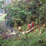 Limpieza de los árboles de Bendum a ser utilizados en el momento de albañilería de la escuela y la nueva siembra de especies autóctonas de la comunidad, que aún está a la espera de derechos de uso de la tierra final. Foto de: P Walpole