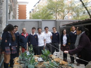 Sanjo's Green 2.0, a collaboration of students and their teachers