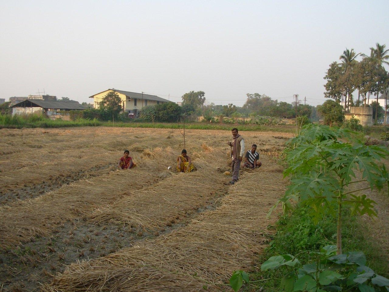 Traiter l'urine et les excréments réutilisés sur les champs Tarumitra. Crédit photo: Kim Andersson/SEI