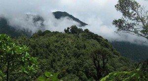 Bosque tropical en Honduras. Foto de: worldlandtrust.org
