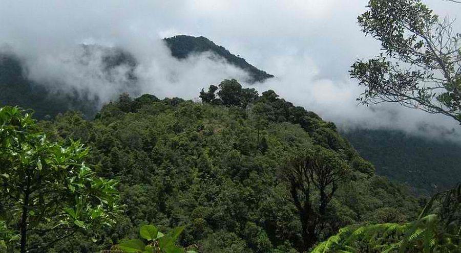 Forêt tropicale à Honduras. Crédit photo: worldlandtrust.org