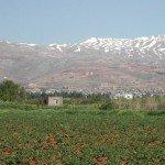 Le domaine Tanaïl, à l'entrée de la région de la vallée de la Bekaa, reste un lieu rare et exceptionnel au Liban avec son bois bien conservé, sa terre et ses produits laitiers, sa crémerie agricole à la fois productie et durable, et ses activités environnementales et touristiques. Crédit photo: arcenciel