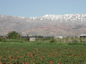 The Tanaïl domain, as one enters the Bekaa valley region, remains a rare and exceptional place in Lebanon with its well-conserved woodland, productive and sustainable agricultural land and dairy creamery, and environmental and tourism activities. Photo credits: arcenciel