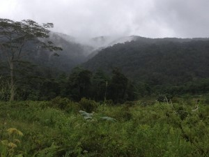 Caring for creation, an upland forest in Bendum, northern Mindanao, Philippines. Photo credit:  P Walpole