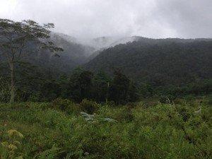 El cuidado de la creación, un bosque de montaña Bendum, norte de la isla de Mindanao, Filipinas. Foto de:  P Walpole
