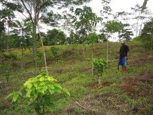 Jóvenes en comunidades indígenas exploran producción de café en las tierras altas de Mindanao (Filipinas) requiriendo asistencia de técnica y comercialización. Foto des: ESSC