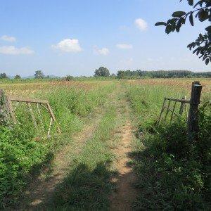 La entrada a la propiedad de la escuela, la tierra productiva, el arroz y el plátano con el pequeño afluente del Maenam Kok por los árboles en la parte trasera. Foto des: P Walpole