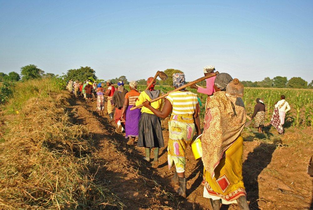 La escasez de agua en las zonas áridas y semiáridas en África requiere adaptación climáticamente-inteligente y ambientalmente sostenible para muchas granjas de agricultura de los pequeños. Foto de: IFAD-UN/Clarissa Baldin