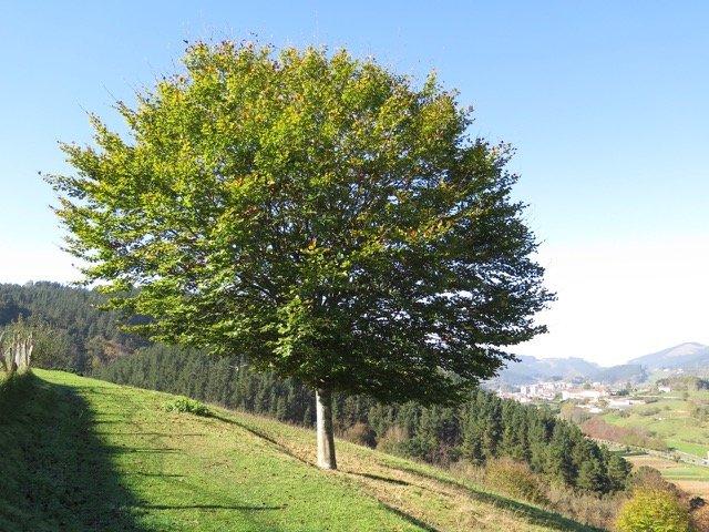 La belleza de nuestros paisajes y la integridad de los medios de vida y estilo de vida nos invitan a la alabanza (Loyola, País Vasco). Foto de: P Walpole