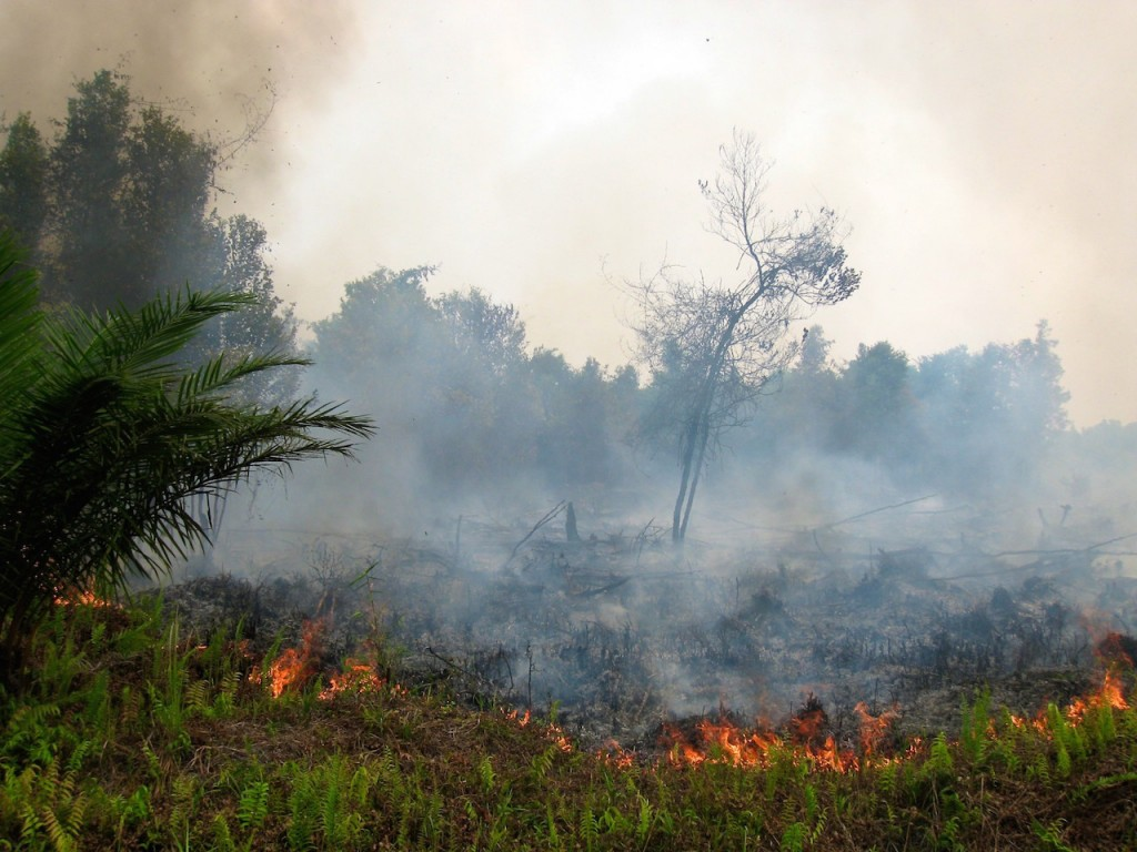 Forest fires in Indonesia since July this year have destroyed around 1.7 million hectares of forests and open land, a devastating annual activity undertaken to prepare land for large-scale plantations and made worse by this year's strong El Niño that provided drier conditions. Photo credit: foodpolicyforthought.com