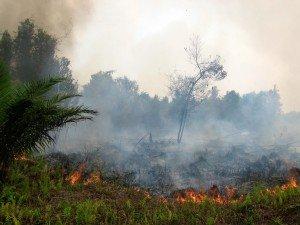 Les incendies de forêt en Indonésie depuis Juillet de cette année ont détruit environ 1,7 millions d'hectares de forêts et de terrains ouverts, une activité annuelle dévastatrice prises pour préparer les terres pour les plantations à grande échelle et aggravés par la forte phénomène El Niño de cette année qui fournit des conditions plus sèches. Crédit photo: foodpolicyforthought.com