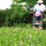 L'usage urbain des terres affecte le service écologique que les abeilles fournissent gratuitement à travers la pollinisation. Crédit photo: Center for Sustainability