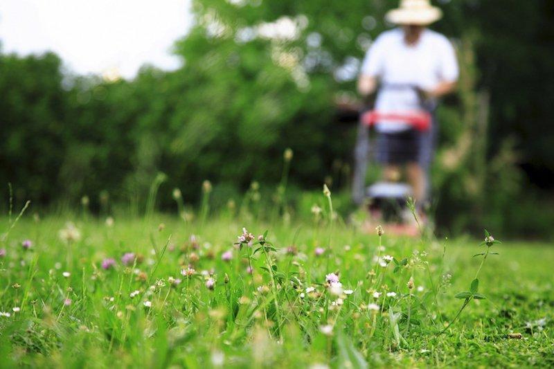 Science de la durabilité pour la recherche et la conservation des pollinisateurs en milieu urbain