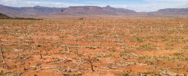 Campos secos en Lesotho en el sur de África debido a la sequía provocada por El Niño que en 2015 y 2016, uno de los más fuertes jamás registrados y que resultó en graves crisis alimentarias y de agua en la región. Foto de: FAO