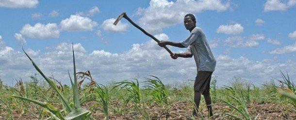Un estudio de marzo de 2015 de la Organización de Naciones Unidas para la Agricultura y la Alimentación informa que los agricultores de los países en desarrollo son los más afectados de los desastres naturales, en especial los efectos clima. Foto de: newsroom.unfccc.int