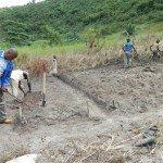 La investigación en el CERED se centra en el impacto del cambio climático en Kinshasa. Foto de: CERED