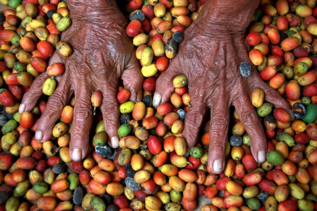 Tseltal women sort coffee beans by hand. Photo credit: E Carrasco-Canadian Jesuits International