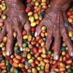 Tseltal women sort coffee beans by hand. Photo credit: E Carrasco-Canadian Jesuits International
