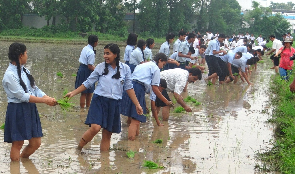 Students experience and learn about SRI, a system of rice cultivation using less water and chemical inputs, during Tarumitra organic rice planting activities.