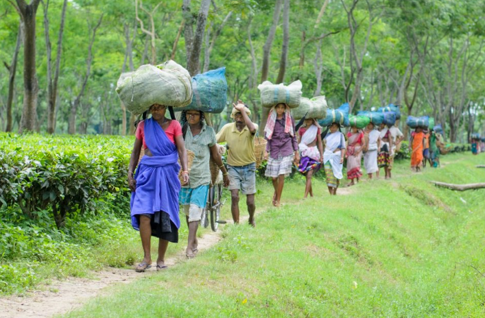 Tea workers in Darjeeling (Photo credit: newsclick.in)