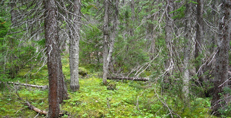 El sueño de una red eclesial boreal